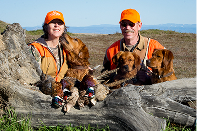 Redtail Golden Retrievers - Pheasant Hunting