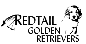 Redtail Golden Retrievers